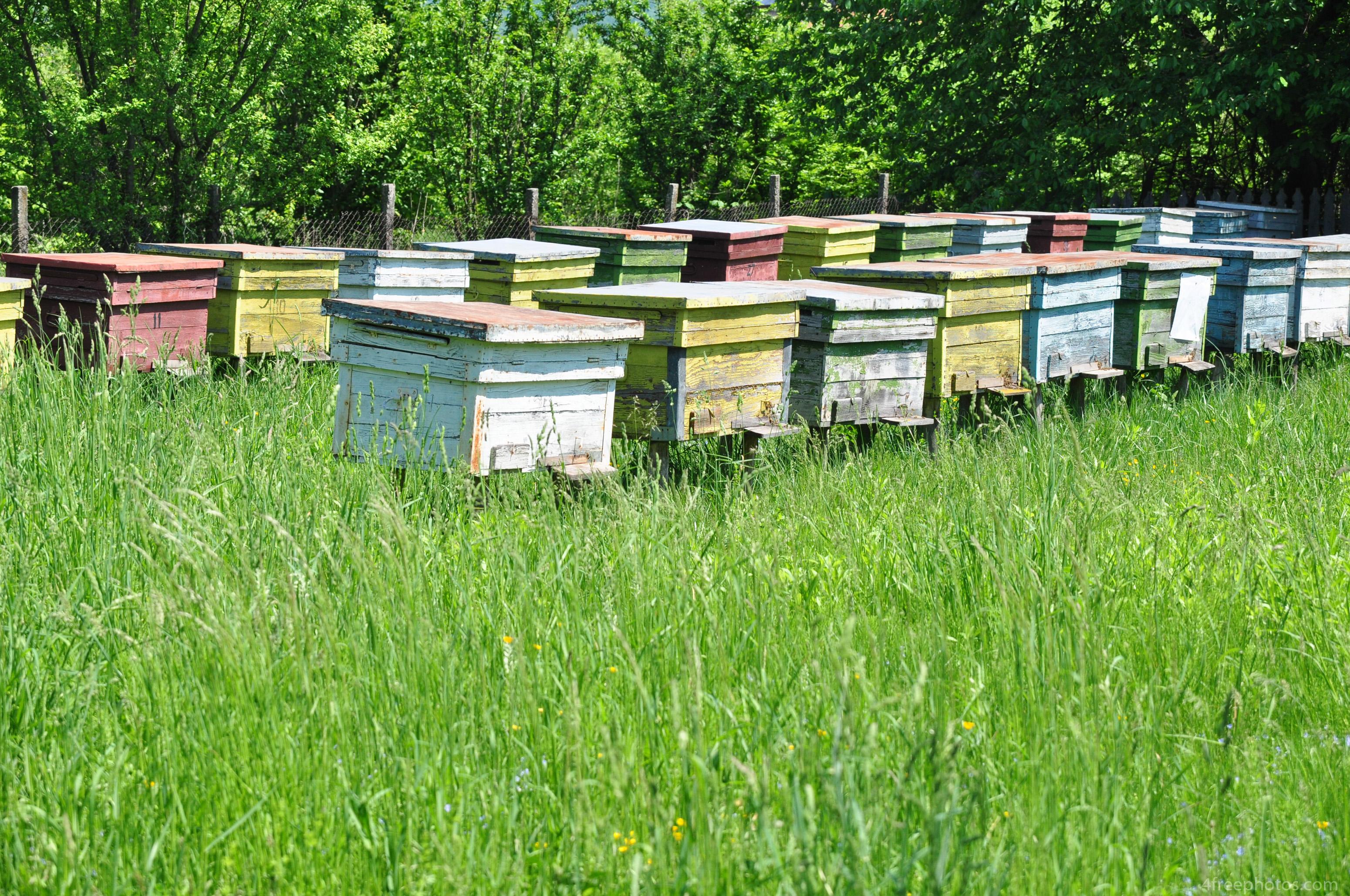 Bienenbeuten im Garten